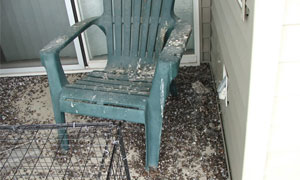 <a href='bird-waste-removal'>Bird Waste Removal</a>